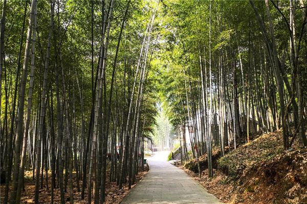 梦见竹子_周公解梦梦到竹子是什么意思_做梦梦见竹子好不好