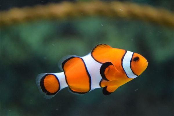 孕妇梦见鱼_周公解梦 孕妇梦见鱼是什么意思_孕妇梦见鱼好不好