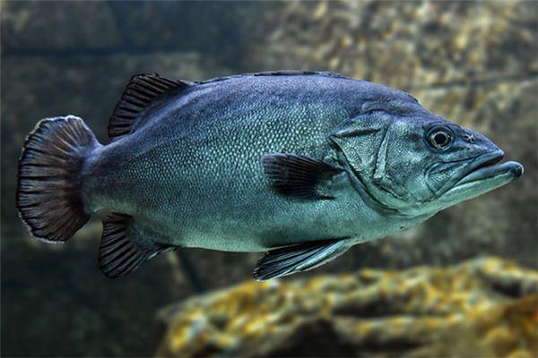 梦见鱼吃人_周公解梦梦到鱼吃人是什么意思_做梦梦见鱼吃人好不好