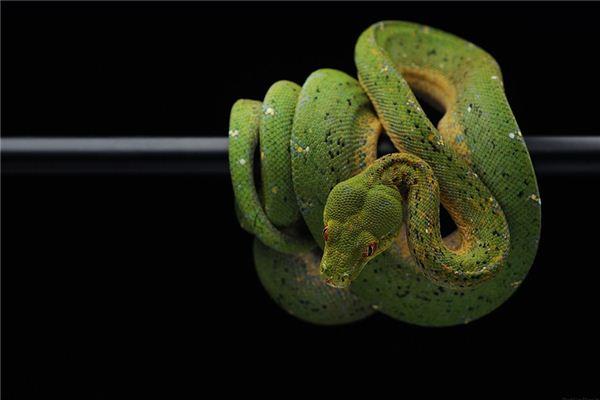 梦见大蛇吃人_周公解梦梦到大蛇吃人是什么意思_做梦梦见大蛇吃人好不好