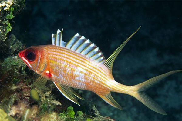 周公解梦大全梦见鱼