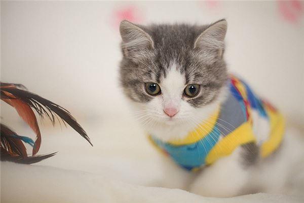 经常梦见猫有什么含义吗?