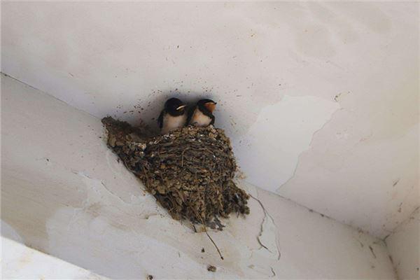 梦见小燕子在我家筑巢,并在窝里叫什么意思