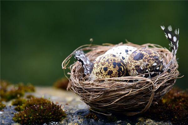 梦见鸟蛋_周公解梦梦到鸟蛋是什么意思_做梦梦见鸟蛋好不好