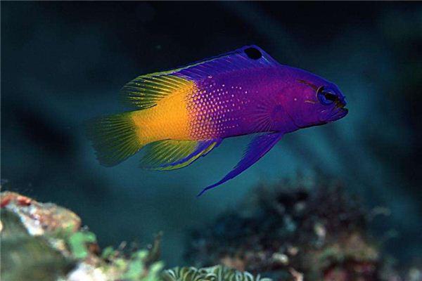 做梦梦见鱼
