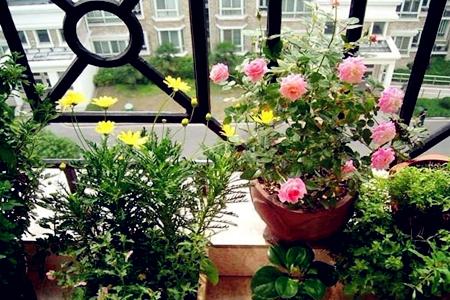 室内风水最适合摆放什么植物?