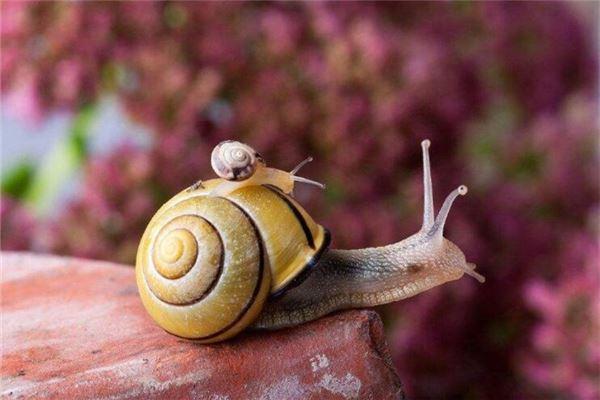 梦见小孩背着蜗牛壳,我把壳打碎小孩哭了