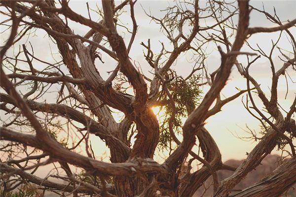 梦见树干残枝_周公解梦梦到树干残枝是什么意思_做梦梦见树干残枝好不好