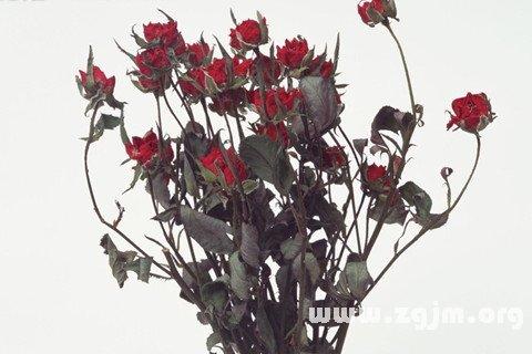 梦见枯萎的玫瑰花_周公解梦梦到枯萎的玫瑰花是什么意思_做梦梦见枯萎的玫瑰花好不好