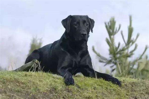 梦见大黑狗开枪,自己死了又活了