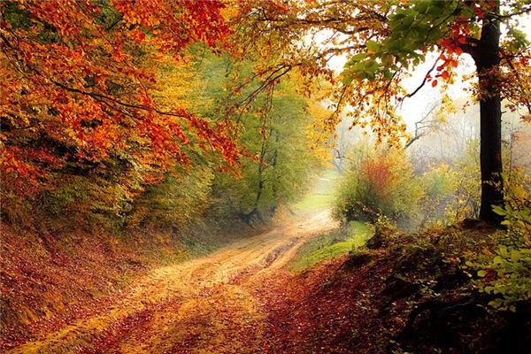 梦见秋季_周公解梦梦到秋季是什么意思_做梦梦见秋季好不好