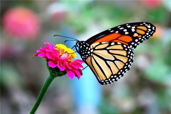 梦见家人激烈地争吵有蝴蝶还收到信