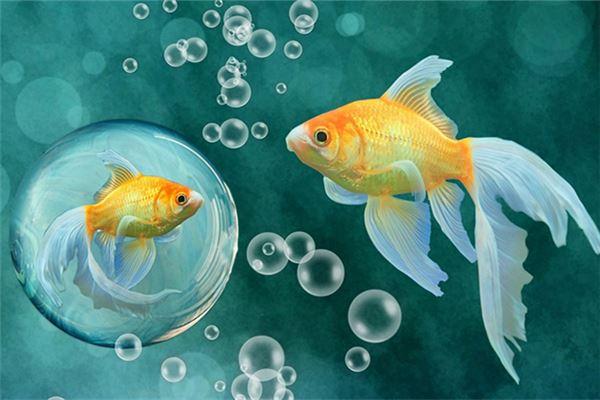梦见有人送鱼给我,孕妇梦见有人送鱼