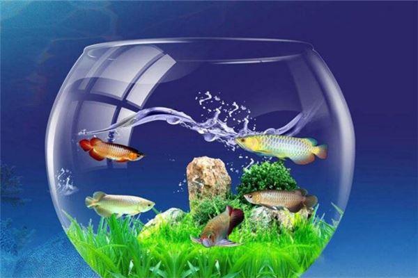 梦见鱼缸里养了金鱼,代表了什么?