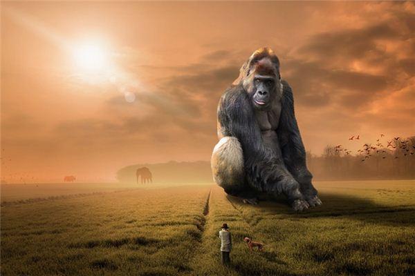 梦见猩猩_周公解梦梦到猩猩是什么意思_做梦梦见猩猩好不好