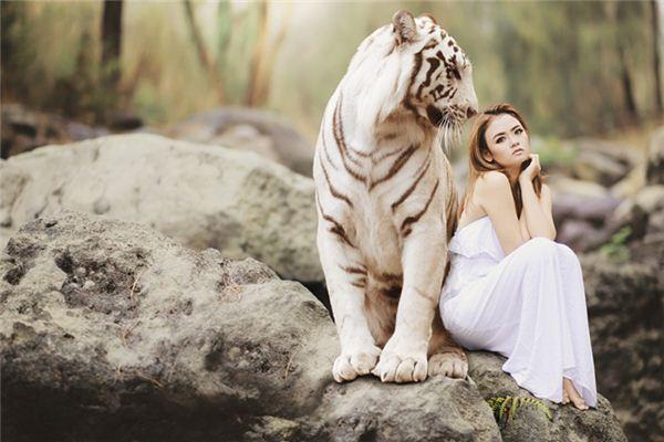 梦见驯服野兽_周公解梦梦到驯服野兽是什么意思_做梦梦见驯服野兽好不好