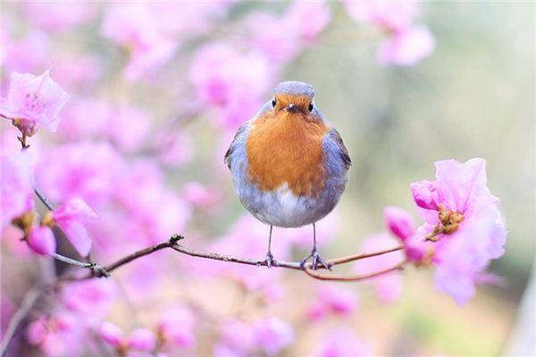 梦见鸟类_周公解梦梦到鸟类是什么意思_做梦梦见鸟类好不好