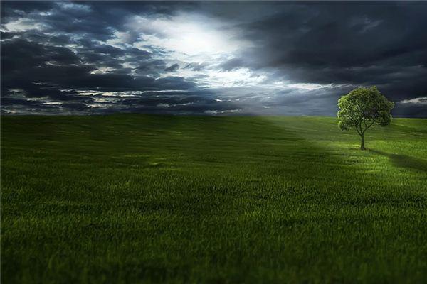 梦见草_周公解梦梦到草是什么意思_做梦梦见草好不好