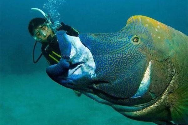 梦见鱼吃人