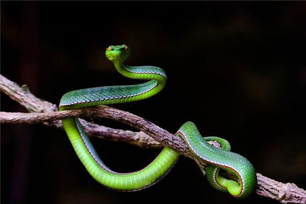 梦见蛇咬自己_周公解梦梦到蛇咬自己是什么意思_做梦梦见蛇咬自己好不好