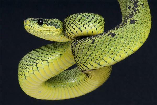 梦见大蟒蛇缠身,被蛇吃掉是什么意思