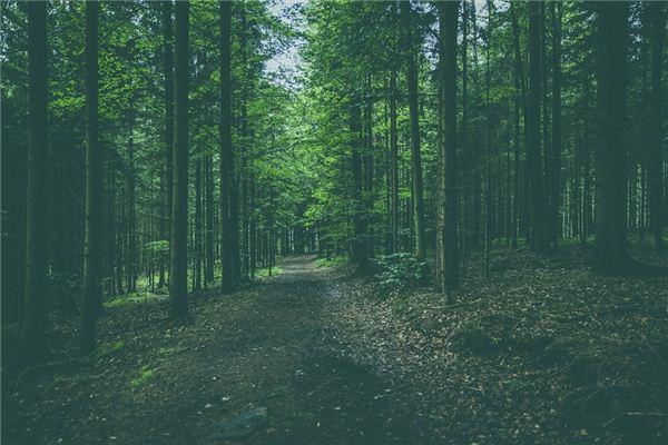 梦见树林_周公解梦梦到树林是什么意思_做梦梦见树林好不好