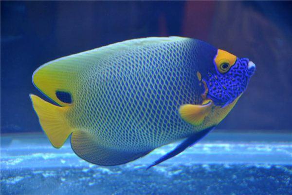 梦见鱼是什么意思