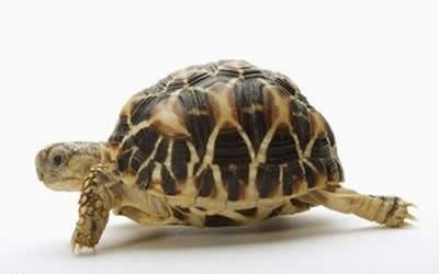 客厅财位放乌龟好不好财位能养龟吗