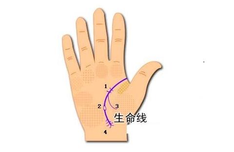 手相分析:生命线与寿命的联系
