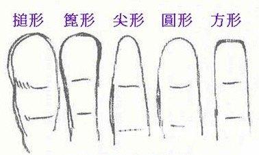 手指形状看性格与职业