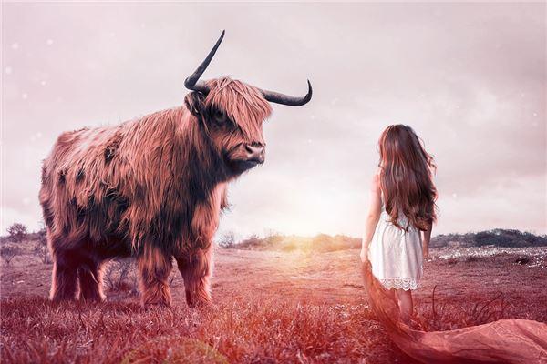 题牛的最佳匹配是什么?_属于牛
