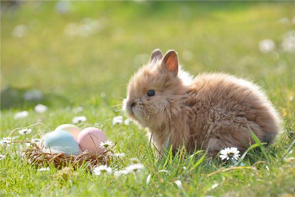 兔年宝宝几日出生最好_属兔