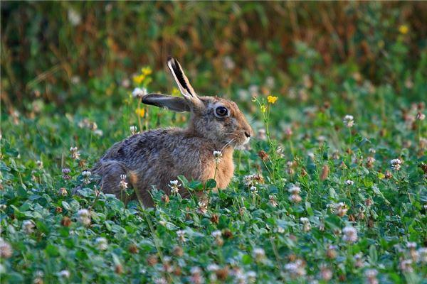 兔年宝宝几月出生最好_属兔