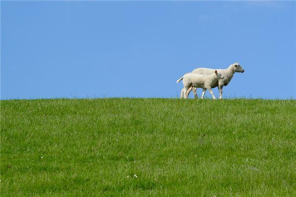 属羊人2020年运势精准解析_2020年生肖运程