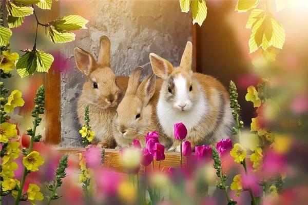 1975年属兔人一生运气_属兔