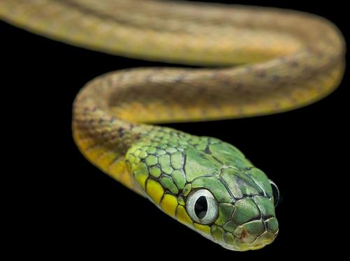 给属于蛇的婴儿起名字的方法