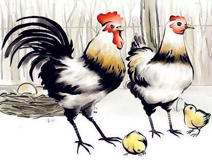属鸡人家里养什么植物好_属鸡