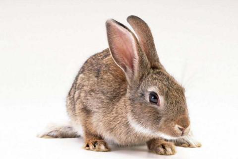 旺兔的属相 什么属相最旺属兔的
