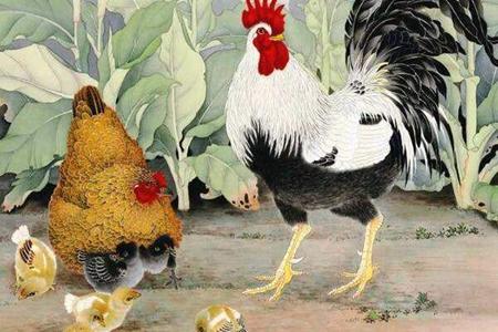 属鸡人2021年上半年运势如何 她们会有偏财运吗