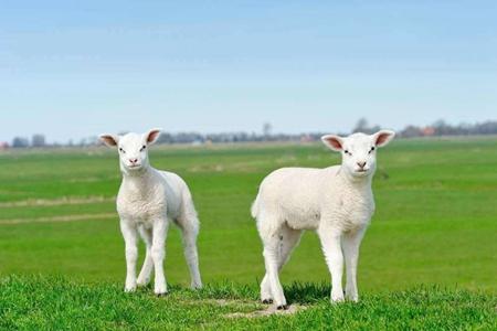 属羊人2021年财运如何 他们会有正财收入吗