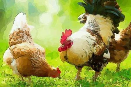 属鸡人2021年1月运势 他们会收获自己的爱情吗