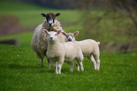 91年属羊人一生的婚姻如何 她们会经历几次婚姻呢