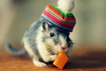 96年属鼠人一生命运如何 她们会有很好的财运吗