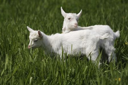 属羊人2021年3月运势 他们会遇到自己的正缘吗