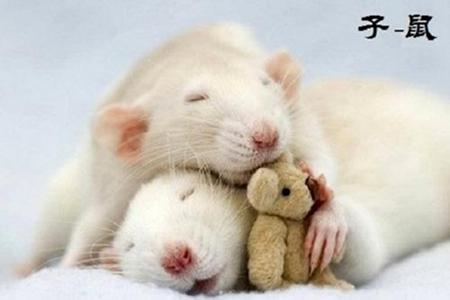 属鼠人2021年4月运势 他们会拥有自己的幸福吗