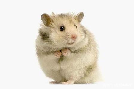 属鼠人2021年5月份运势 他们会拥有偏财运吗
