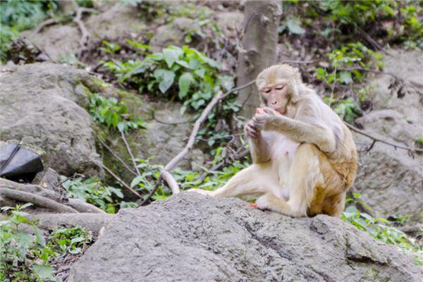 29岁什么生肖属相_属猴