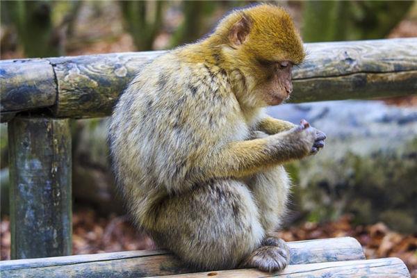 属相猴的年份是哪些_属猴