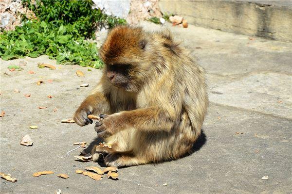属猴的人出世年份性情_属猴