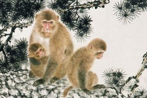 生于农历九月属猴人好不好命运